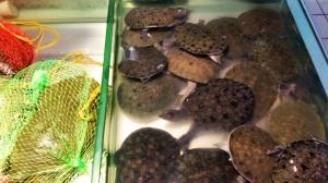 Schildkrötensuppe